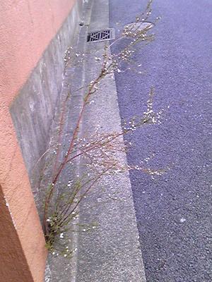 20110318_004